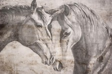 Fotobehang art-collection paarden